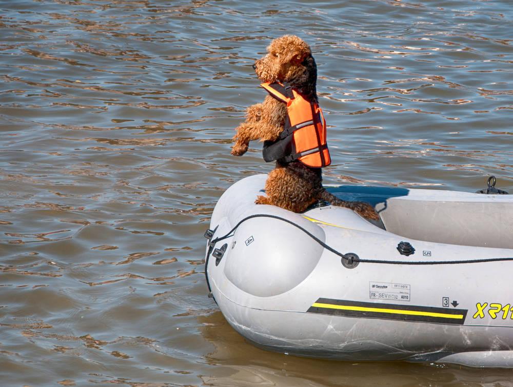Cómo fabricar un chaleco salvavidas para perros