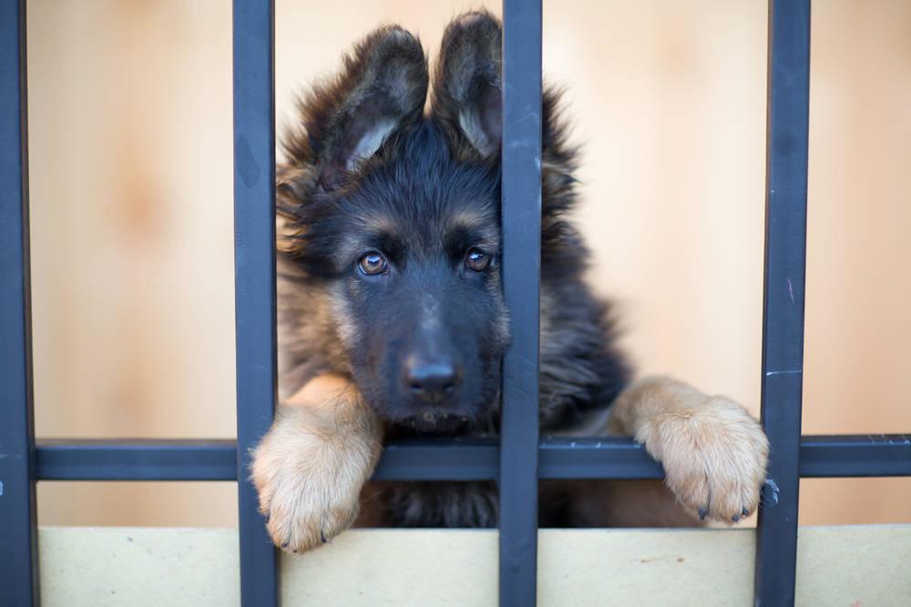 Adopción de mascotas: no a la compra