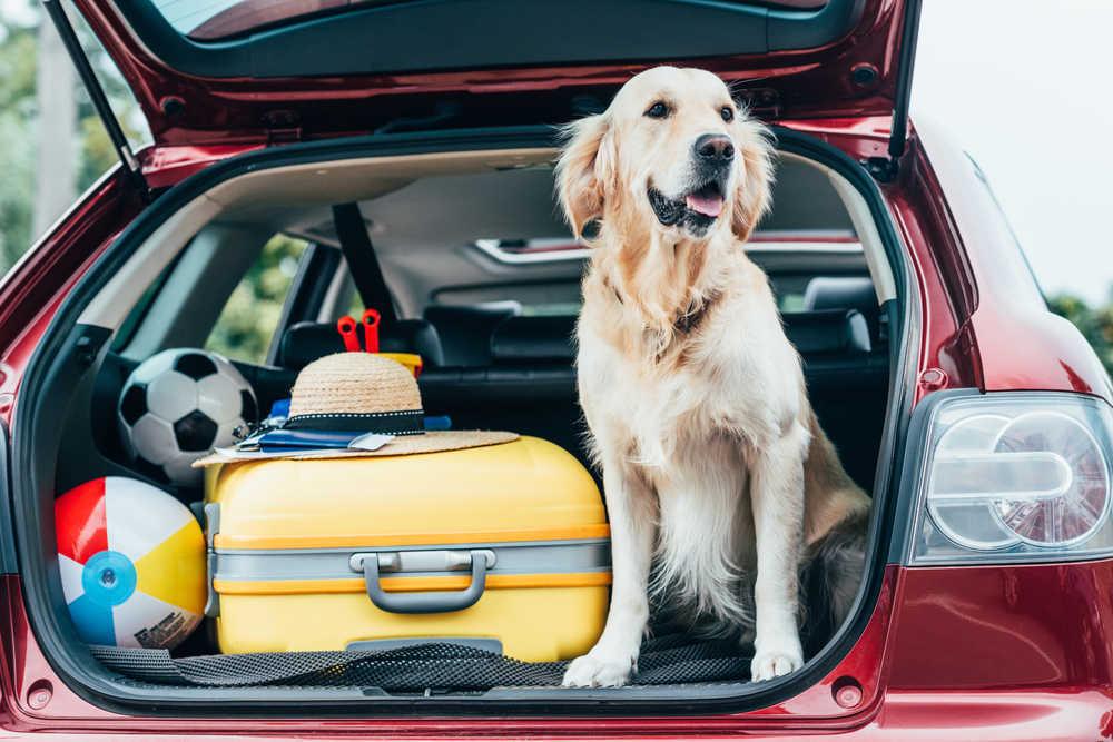 Consejos para viajar con tu mascota de forma segura