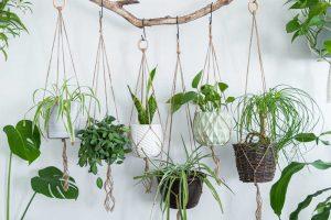 Plantas que debes tener en casa y cómo cuidarlas
